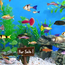 Fish Tycoon - Your fish in Fish Tycoon grow in real time - even when your PC is off! - logo