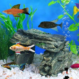 Fish Tycoon - Fish Tycoon is a classic fish-breeding game. Breed fish until you discover 7 magical fish that solve a genetic puzzle. Play on your Android device! - logo